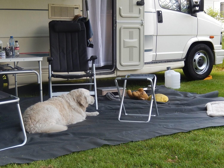 Camper met hond op Hondencamping 't Witte Zand