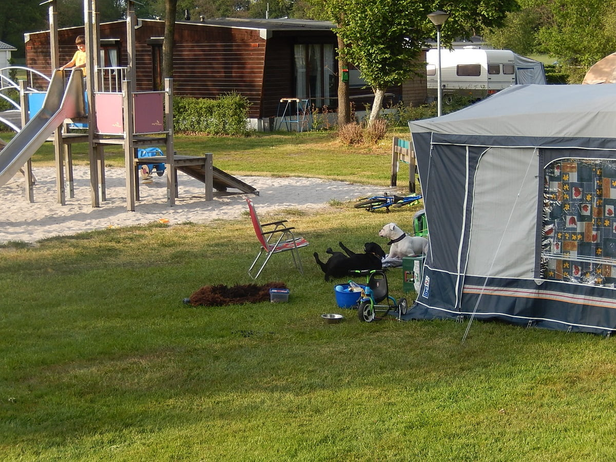 Honden op camping 't Witte Zand