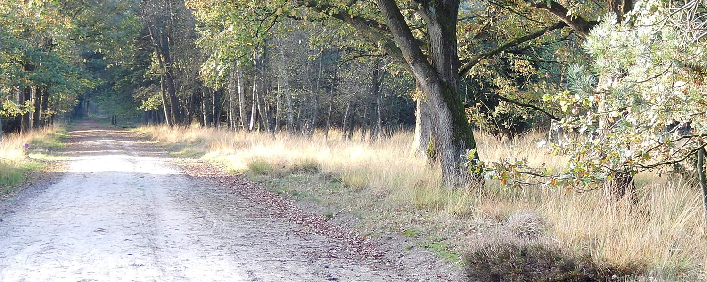 Omgeving 't witte zand Meppen Drenthe 1500x600