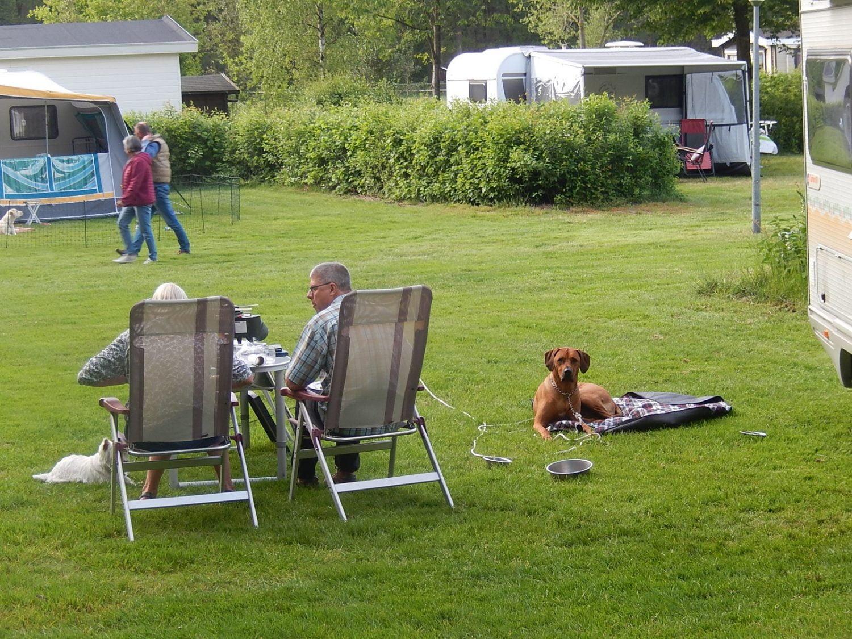 Omheind terrein hondencamping 't Witte Zand