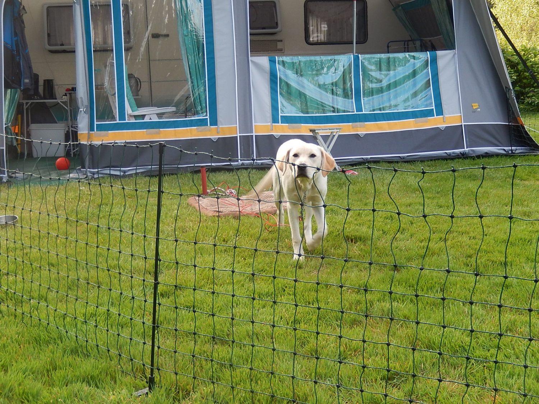 Omheinde plek op hondencamping 't Witte Zand