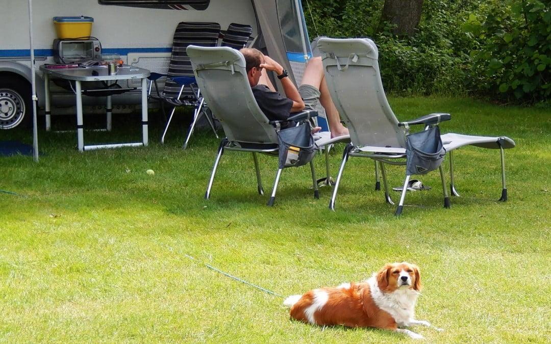 Uw hond mee naar de camping