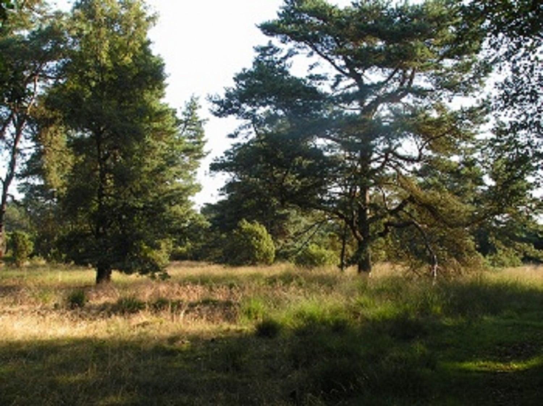 omgeving 1