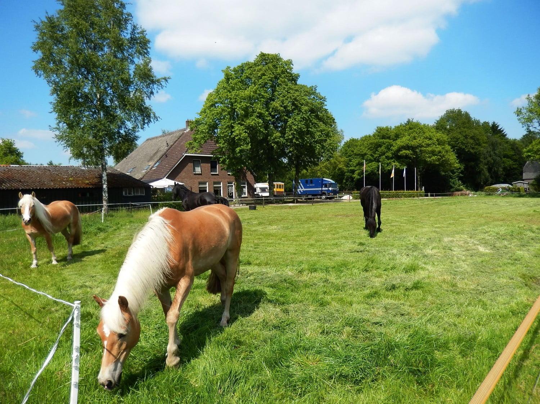 paarden vakantie 10