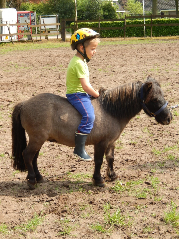 paarden vakantie 6